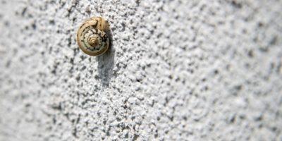 snail-1792651_1280